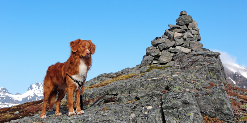 Hike dog Lofoten