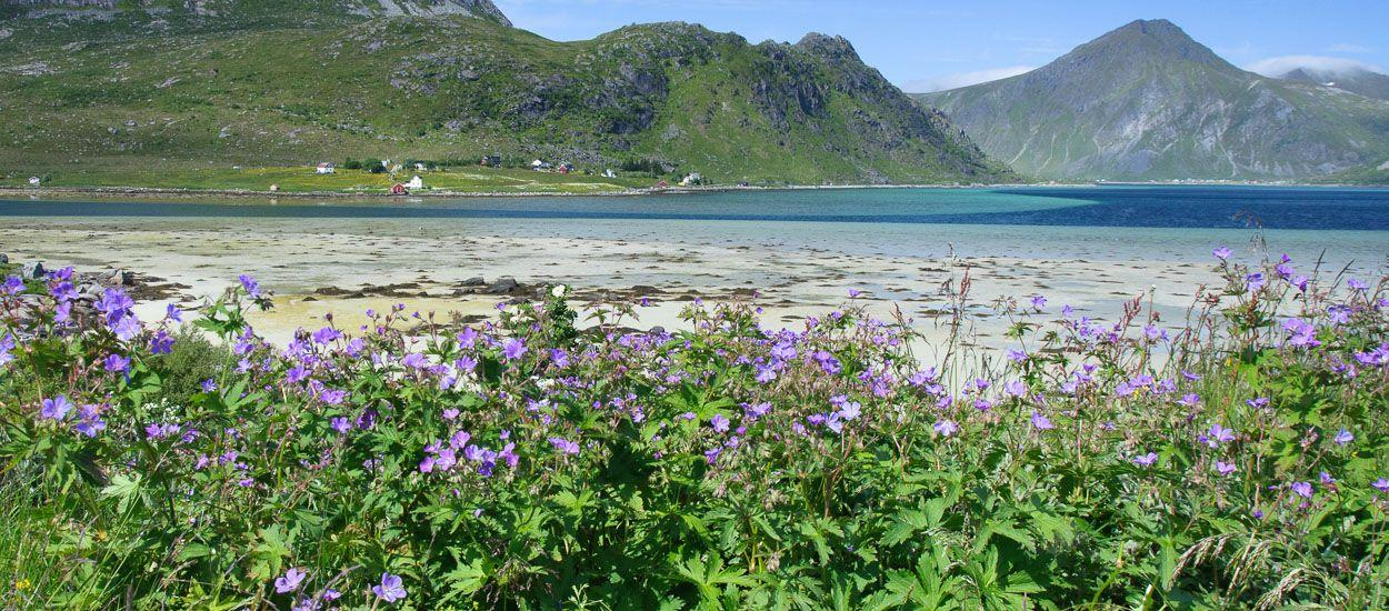 Flora-lofoten-norway-1